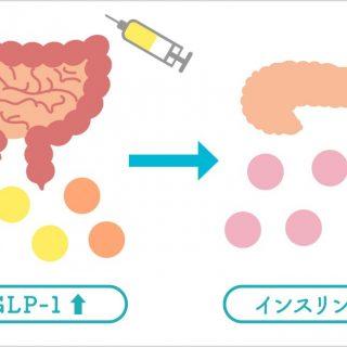 糖尿病の新薬「GLP-1受容体作動薬」<br>~ 食後血糖の変動を抑制する注射薬 ~