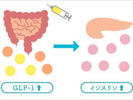 糖尿病の新薬「GLP-1受容体作動薬」