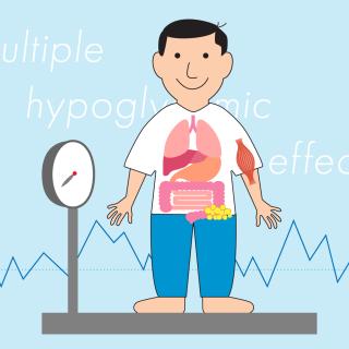 インスリンの効きを良くして血糖値を下げる「ビグアナイド薬」<br>〜 体重が増えにくく低血糖が起こりにくい〜