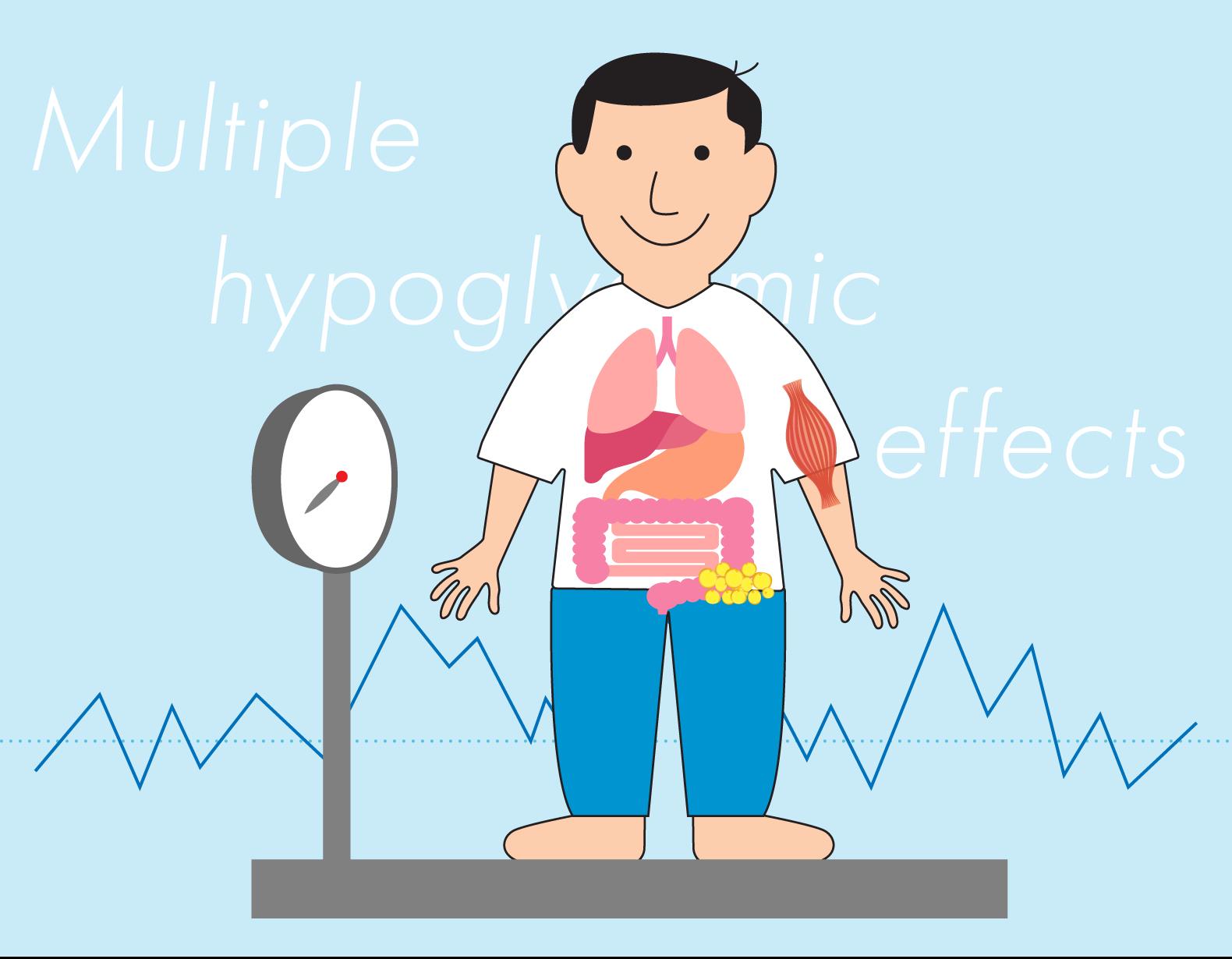 インスリンの効きを良くして血糖値を下げる「ビグアナイド薬」 〜 体重が増えにくく低血糖が起こりにくい〜